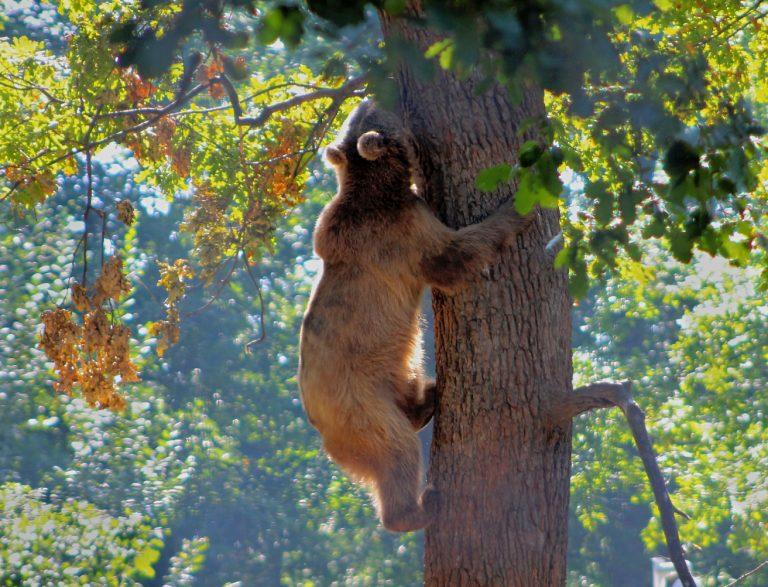 פארק הדובים בזרנשט